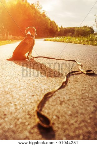 Lost Dog Sitting On The Road Alone