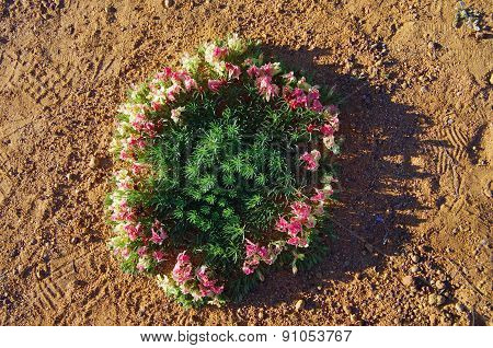 wreath flowers in Western Australia