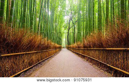 Path To Bamboo Forest, Arashiyama, Kyoto, Japan.