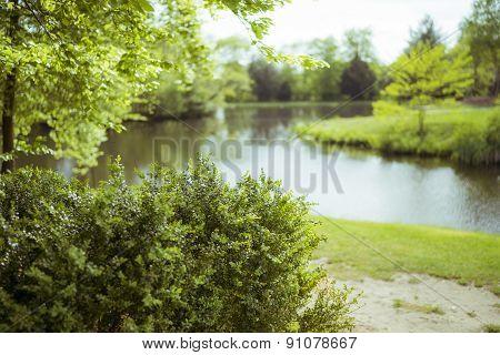 Blurred bush and lake May