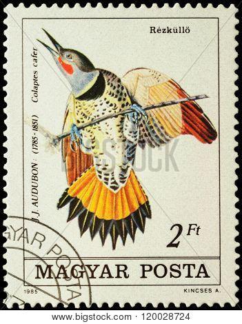 Northern Flicker (colaptes Cafer) On Postage Stamp