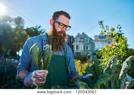 inspecting kale plants inside of urban communal garden
