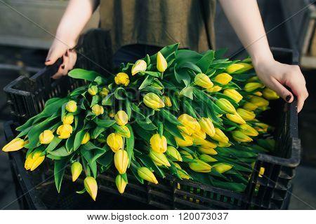 black box  full by yelllow tulips
