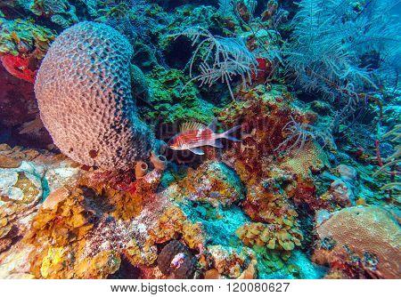 Coral Reef Near Cayo Largo