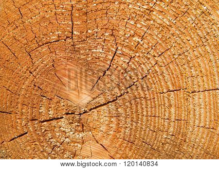 Sawn tree log with concentric circles showing its age in years background texture