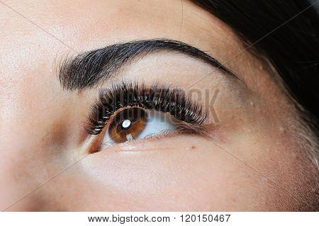 Beauty Woman Portrait. Professional Makeup Brunette Beautiful Fashion Model Girl