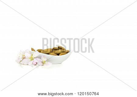 Isolated almond flowers and raw almonds