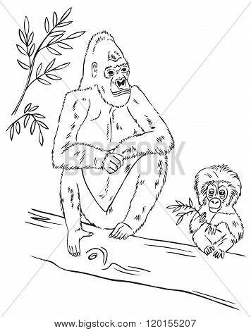 Gorilla Family On Tree