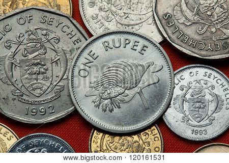 Coins of the Seychelles. Triton trumpet (Charonia tritonis) shell depicted in the Seychellois one rupee coin.