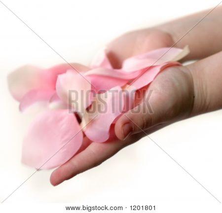 Petals In Hands F
