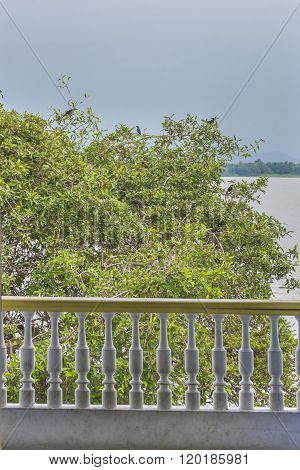 Tree With Birds At Guayas River In Guayaquil Ecuador