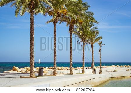 Sunny Mediterranean Beach, Promenade With Palm Trees, Torrevieja, Spain