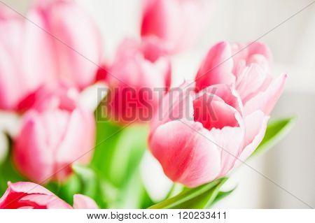 Tulip Best Flowers
