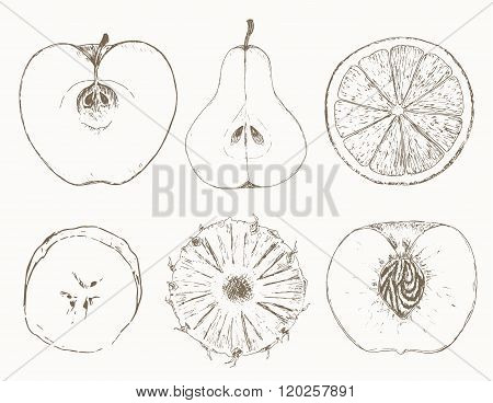 Sketch of half fruits