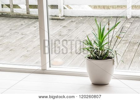 Green Plant In An Indoor Pot