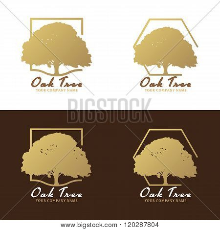 Gold and brown Oak tree logo vector design