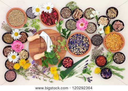 Natural flower and herb selection used in herbal medicine over speckled handmade cream paper background.