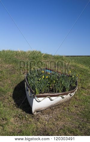 Daffodils In A Boat Along The Sea Wall, Canvey Island, Essex, England
