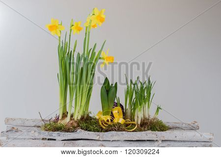 Daffodils in wooden basket