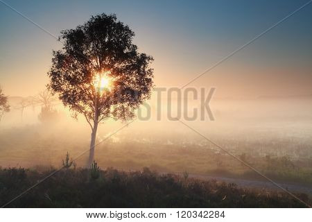 Sunshine Through Tree During Misty Morning
