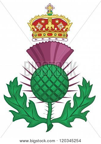 Thistle Symbol Of Scotland