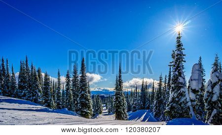 Sun on top of a Tree on Mount Morrisey at the village of Sun Peaks