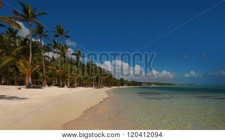 Palm trees on tropical beach Bavaro Punta Cana Dominican Republic