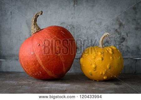 Pumpkins over concrete background. Group of pumpkins. Autumn harvest