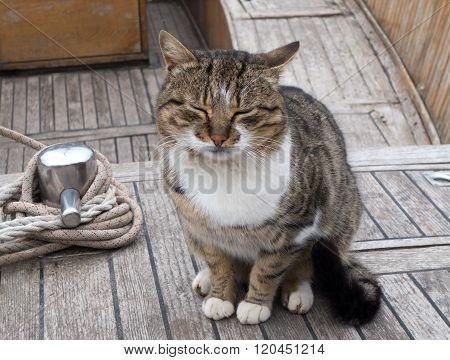 Fishing Boats And A Big Cat