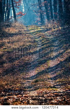 Misty path in the oak forest in autumn