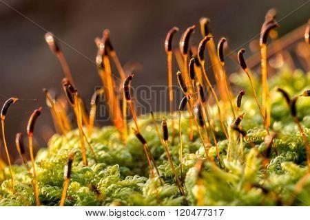 Bright green moss macro shot in a sunset light