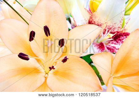 Close Up Includes A Bunch Of Lily Flowers
