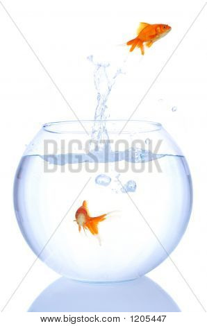 Goldfish Splash
