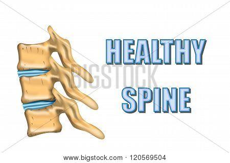 illustration of a healthy spine and intervertebral discs