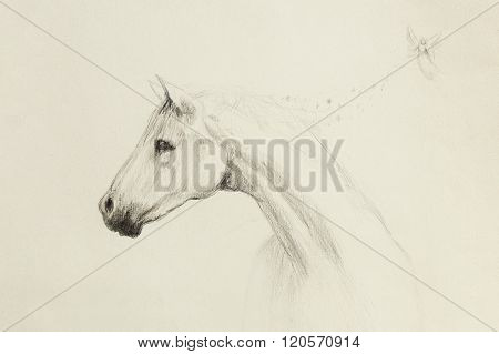 horse pencil drawing and little fairy on old paper, vintage paper.
