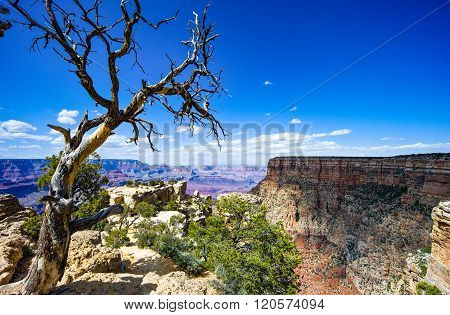 U.S.A. Arizona. the Grand Canyon South Rim.