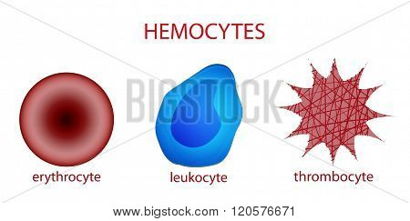 illustration of blood cells. erythrocyte, leukocyte, platelet