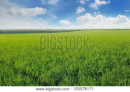 Green Field And Blue Sky With Clouds