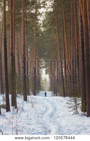 People Walking Along A Path In The Woods