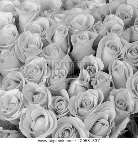 Rose Flower Bouquet, Black And White Background