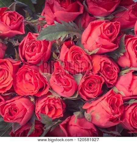 Red Rose Flower Bouquet Vintage Background