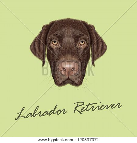 Labrador Retriever Dog Portrait.