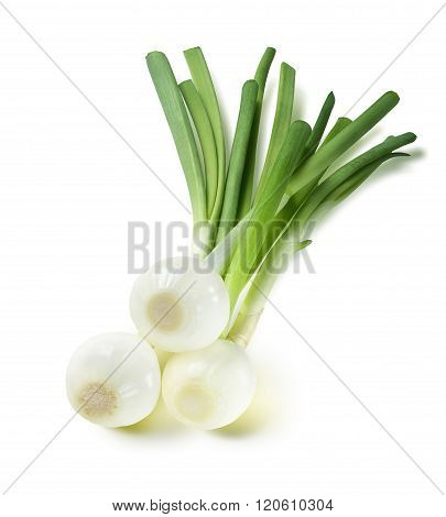 Green Spring Onion Square Composition Isolated