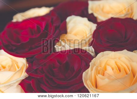 Red And Yellow Floral Natural Roses Retro Colors Background