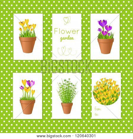Set Of Vector Tgs With Garden Flowers In Pots.gift Tags And Cards With Flowers. Stock Vector Illustr