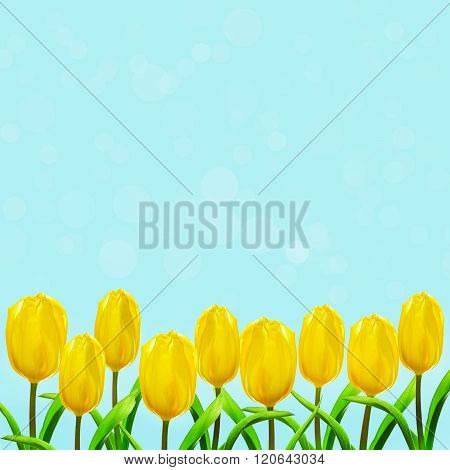Yellow tulips stretch to the sun's rays