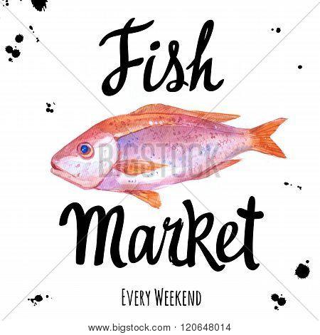 Illustration with watercolor surmullet. Fish Market.