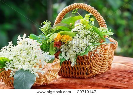 Collected Elderflower And Other Medicinal Herbs
