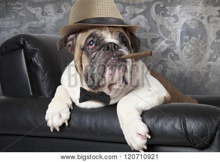 English Bulldog With A Cigar