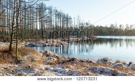 andscape with the frozen plants and the hoar-frost. Frosty morning in raised bog. Kemeri National park Latvia poster